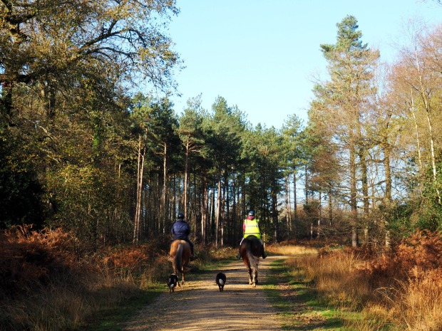 A weekend in the New Forest