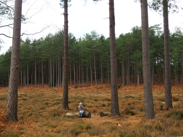What do to in the New Forest