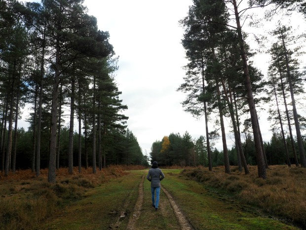 What to do in the New Forest