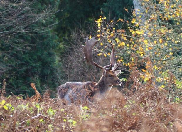 New Forest wildlife